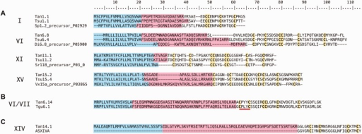 Representative BLAST alignments of T. anilis and Te. subulata teretoxin transcripts. Blue indicates the signal sequence, pink the proregion, and yellow the cysteines. Roman numerals on the left indicate the corresponding cysteine framework assigned to each transcript. (A) Example alignments displaying homology of teretoxins to the top conotoxin analog BLAST hit. There is conservation of Cys patterns in mature peptide toxins between teretoxins and conotoxins. (B) PXY (Pro-X-Tyr), where X can be any intervening residue is a conserved amino acid motif found in a majority of VI/VII teretoxin transcripts. PXY motif underlined in red. (C) Tan14.1 is the only putative teretoxin identified displaying a high degree of sequence identity to a conotoxin (asXIVa).