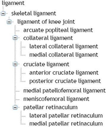 Subclassification of ligaments in the TRAK ontology. The hierarchy is based on is–a relationship