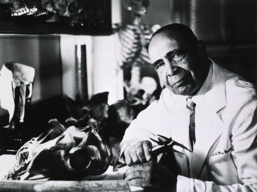<p>Half-length, left pose, seated beside several bone specimens and holding caliper.  A skeleton is in the background.</p>