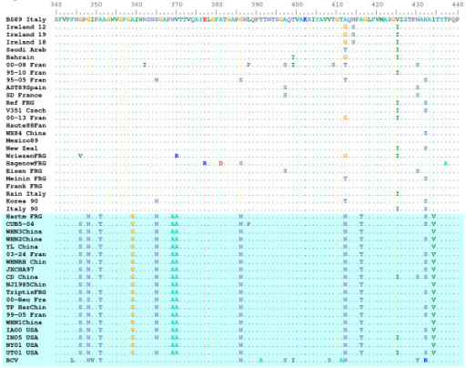 RHDVa-specific epitope between residues 340 and 440 of the VP60 capsid protein. A portion of the CLUSTAL W alignment of the VP60 sequence for 45 isolates of RHDV and 1 isolate of a non-pathogenic rabbit calicivirus (RCV) is shown. The top reference sequence for the alignment came from the Brescia 1989 strain (BS89 Italy) and identical amino acids were indicated by a dot. Note the large number of shared amino acid substitutions within the RHDVa clade (shaded blue).