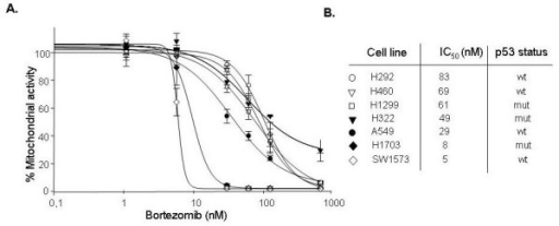 Growth inhibition by bortezomib in NSCLC cells. (A) Growth curves (MTT assays) of NSCLC cells treated with different concentrations of bortezomib. Mean of at least three independent experiments, SD. (B) IC50 concentrations and p53 status of individual cell lines. Wt: wild type; mut: mutated.