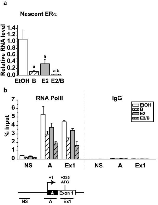 Bortezomib results in a decrease in the nascent ERα mRNA transcript by decreasing RNA PolII on the ERα promoterMCF7 cells were treated for 30 minutes with 30 nM bortezomib and then for 24 hours with 10 nM E2. a) RNA isolation and qRT-PCR were performed as described in Figure 4 for the nascent ERα transcript. The data were analyzed relative to the average EtOH treatment and the mean of three independent experiments is shown. Statistics were performed to demonstrate significant differences (p< 0.05) between vehicle control and estrogen and are marked a and b, respectively. b) Chromatin immunoprecipitation (ChIP) was performed using antibodies for RNA PolII and IgG. Primers for non-specific (NS), the A promoter (A) and exon 1 (Ex1) regions of the ERα promoter were used with qRT-PCR to examine the occupancy at each site. Data are presented as the mean percent input of three independent experiments. Error bars represent the standard error of the mean.
