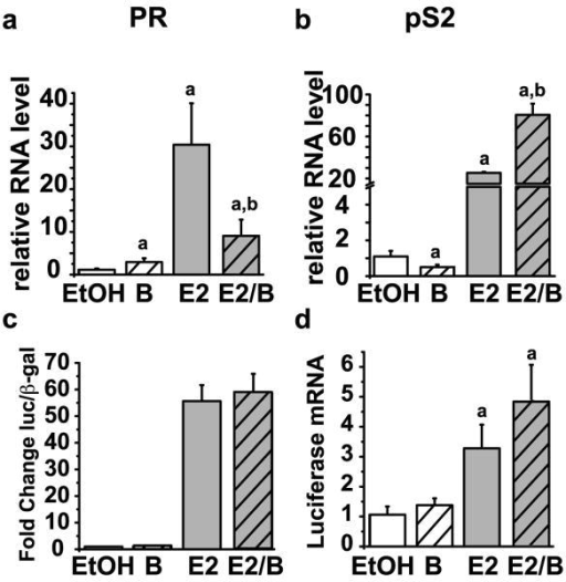 Proteasome inhibition results in gene specific effects on ERα target gene transcriptionMCF7 cells were treated for 30 minutes with or without 30 nM bortezomib and then treated for 24 hours with or without 10 nM E2. RNA isolation and qRT-PCR were performed as previously described using primers for a) PR or b) pS2. Data represent the means of a minimum of three independent experiments and error bars represent the standard error of the mean. Statistically significant differences (p< 0.05) relative to vehicle control (EtOH) or estrogen and are indicated with a or b, respectively. MCF7 cells were transfected with a 3× ERE-tk luciferase reporter plasmid and CMV-β-galactosidase (β-gal) plasmid. The next day the cells were treated for 24 hours with or without 30 nM bortezomib and 10 nM E2. c) Luciferase and β-galactosidase assays were performed on whole cell lysates. d) RNA isolation and qPCR was performed as previously described for luciferase mRNA. Data are presented relative to the EtOH control and error bars were calculated from the standard error of the mean of three independent experiments.