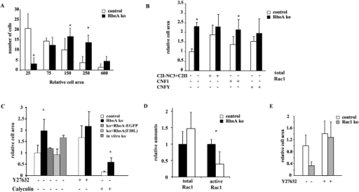 RhoA and ROCK-mediated contraction counteract spreading in the presence and absence of Rac1. Area of primary RhoA- (ko) and control (con) keratinocytes was measured (A) in the absence of inhibitors, (B) in the presence of the Rho inhibitor C2I-NC3 (the activating toxins CNFY and CNF1), and (C) in the presence of the ROCK inhibitor Y27632 and the MLCP inhibitor calyculin. Transfection of RhoA- keratinocytes with an EGFP-RhoA fusion (ko + EGFP-RhoA) or a high-cycling mutant form of RhoA (F30L) rescued the increased spreading phenotype (ko + RhoA [F30L]), whereas RhoA knockout induction in vitro reproduced defect (ko in vitro). (D) Reduced levels of GTP-bound active Rac1 in cultured RhoA- keratinocytes (n = 3/3; p < 0.05). (E) Spreading-defective Rac1- keratinocytes treated with Y27632 are able to spread.