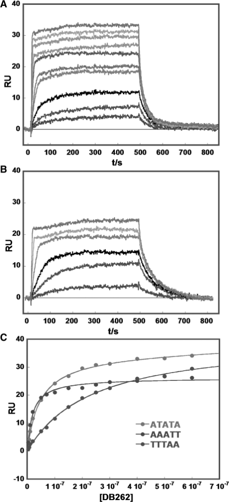 Example biosensor-SPR sensorgrams (instrument response in RU values versus time) for binding of DB262 to (A) ATATA and (B) AAATT at 25°C. The unbound compound concentrations in the flow solutions range from 0.005 µM in the lowest curve to 1 µM in the top curve. Experiments were conducted in cacodylic acid buffer with 0.1 M NaCl. (C) SPR binding plots for DB262 in the presence of ATATA (top), AAATT (middle) and TTTAA (lower). The RU values from the steady-state region of SPR sensorgrams are plotted versus the unbound compound concentration. The RUs and the concentrations of DB262 are from repeat experiments. The lines in the Figure are for one or two-site fitting ('Methods' section). K values for AAATT were obtained by using a one-site model and for ATATA and TTTAA with a two-site model to get K1 and K2. K2 was much lower than K1 and only K1 values were used in the comparison plot in Figure 7.