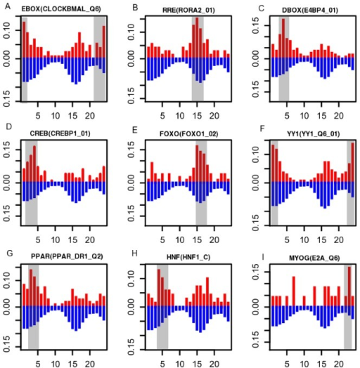The circadian phase distributions of predicted targets of nine circadian TF motifs.The percentage of predicted targets within a certain phase is plotted against the circadian phase between 0 and 24 hours. The red bars indicate phase distributions of targets of circadian TFs, whereas the blue bars indicate the phase distribution of all ZCOGs as the background. Gray boxes show the enriched time windows of the targets (p<0.001). The matrix IDs corresponding to TFs were indicated in the parentheses (Table S7).