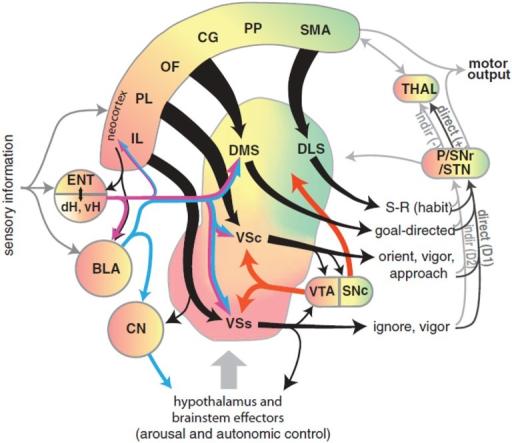 Rat Brain Diagram Block And Schematic Diagrams