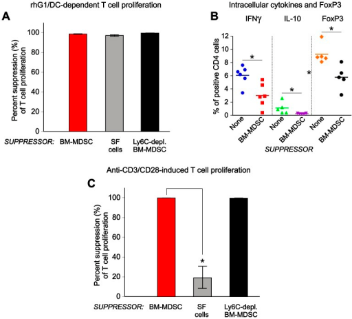 "Suppression of antigen (Ag)-specific and non-specific T-cell responses by BM-MDSCs.(A) T cells, purified from the spleens of mice expressing a PG-specific T cell receptor transgene (PG-TCR-Tg) were cultured for 5 days with dendritic cells (DCs) loaded with recombinant G1 domain of human PG (rhG1) in the absence or presence of the following ""suppressors"": BM-MDSCs (red bar), arthritic SF cells (gray bar), or Ly6Chi (monocytic) cell-depleted BM-MDSCs (black bar). The ability of suppressors to inhibit Ag (rhG1)-specific T-cell proliferation (which is also dependent on Ag presentation by DCs) was assessed on the basis of inhibition of [3H]thymidine incorporation by the T cells. Percent suppression was calculated as described in the Methods. All suppressors exhibited robust inhibition of T-cell proliferation. The results shown are from 5 independent experiments. (B) T cells from PG-TCR-Tg mice were cultured for 2 days with rhG1-loaded DCs and BM-MDSCs as described for panel A. The percent of CD4+ T cells containing IFNγ, IL-10, or FoxP3 (CD4+CD25+FoxP3+ T regulatory cells, Tregs) was determined by flow cytometry. The results shown are the individual values (n = 5–6) and the means. On average, the percentages of IFNγ+ cells, IL-10+ cells, and Tregs were lower in the presence of BM-MDSCs (*p<0.001, 0.001, and 0.05, respectively; Mann-Whitney U test) than in their absence (None). (C) T cells from PG-TCR-Tg mice were cultured in anti-CD3/CD28-coated plates for 4 days in the absence or presence of the listed suppressors. Percent suppression was calculated and results expressed as described for panel A. Non-depleted BM-MDSCs and BM-MDSCs depleted in Ly6Chi cells were equally potent in suppressing anti-CD3/CD28-induced T-cell proliferation, while arthritic SF cells exhibited much weaker inhibition (*p<0.01, n = 5; Kruskal-Wallis test followed by Dunn's multiple comparisons test) in this induction system."