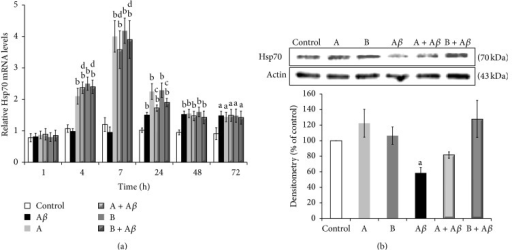 Broccoli sprouts juices protect SH-SY5Y cells from Aβ25–35-mediated apoptosis through upregulation of HSP70 gene expression. (a) SH-SY5Y cells were incubated with 25 μM Aβ25–35 in the presence or in the absence of 10 μL/mL of juice A or juice B for 1, 4, 7, 24, 48, and 72 h. After treatment total RNA was extracted and used for qRT-PCR determination of HSP70 gene induction. The RSP27A housekeeping gene was used as a control for normalization of the data. The relative amounts of gene expression were calculated by the comparative threshold cycle (ΔΔCT) method. The intracellular levels of mRNA are expressed as fold induction compared to control cells at 0 h of incubation. (b) Cell lysates obtained after 7 h of treatment were subjected to western blot analysis with anti-Hsp70 antidoby. Actin levels were compared to ensure equal amount of protein loading. The intracellular Hsp70 protein levels in the samples were expressed as a percentage compared to the control. Data are represented as mean ± SEM (n = 3), aP < 0.05 and bP < 0.01 versus control; cP < 0.05 and dP < 0.01 versus Aβ25–35.