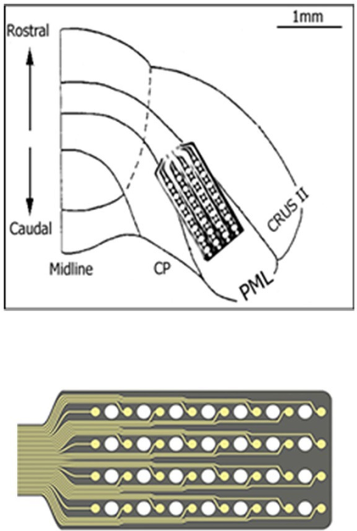 The implant location of the recording array is depicted on the right paramedian lobule (PML) of the posterior cerebellum. The 4 × 8 arrangement of the contacts on the micro-electrode array is also shown at a large scale on the bottom. A few contacts fell outside the paramedian lobule because of medially narrowing shape of the PML.