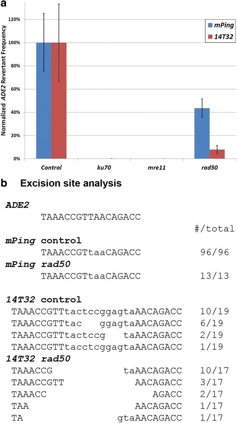 Transposition assays in NHEJ deficient yeast. Normalized ADE2 revertant frequency for the mPing (blue) and 14T32 (red) elements in control (JIM17) and NHEJ mutant yeast strains (a). Error bars indicate the standard error for 6 replicates. Repaired excision sites from control and rad50 yeast strains (b). Lowercase letters indicate the bases derived from the TSD (mPing) or TIRs and TSDs (14T32)