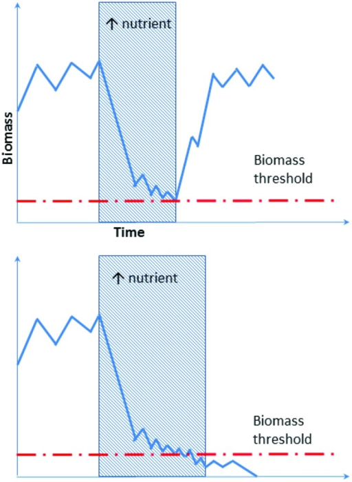 Schematic illustration of an oligotroph's response to alteration in local nutrient content. The oligotroph is suppressed periodically when large amounts of nutrients are available. Biomass then returns to the original level when the nutrients become depleted by the copiotroph, promoted by environmental change. In the event of prolonged nutrient alteration oligotrophs may drop below the biomass threshold (lower graph), and it will not recover even if nutrient levels returns to the original state.