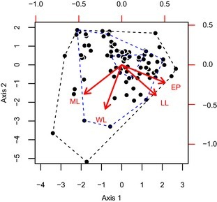 Biplot displaying the structure of the morphological space on the first two principal coordinate axes occupied by the ant fauna of the Sani Pass, southern Africa. Each data point is a species. Lower and left hand axes describe the axis scores (synthetic traits) for each species. Upper and right hand axes describe the loadings of each original trait on the principal coordinate axes. The loadings of each original trait are visualized with red labels and arrows (WL, Weber's length; ML, relative mandible length; LL, relative leg length; EP, eye position). For illustration, black dashed lines represent the convex hull of the entire ant fauna. Inner and outer blue dashed lines represent the convex hull of the assemblages at 3000 and 900 m a.s.l., respectively, for the wet season of 2009. These two assemblages display functional nestedness.