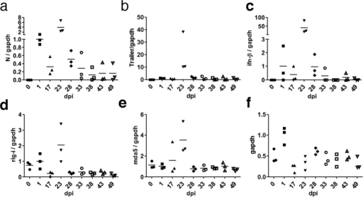 Viral RNA levels and IFN response during the establishment phase of MV persistent infection.The ratios of MV N protein (a), MV-Trailer (b), ifnb1 (c), rig-I (d), and mda5 (e) to gapdh in three independent infections are graphed. Horizontal bars indicate averages. Segmented y-axes are used in (a) and (b). (f) Relative amounts of gapdh are graphed. The cell numbers were adjusted at the time of cell harvest, except at 1 dpi because identical numbers of cells were inoculated the previous day.