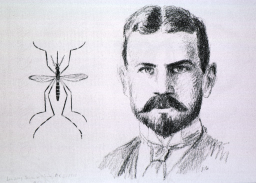 <p>Head and shoulders, full face; also showing mosquito.</p>