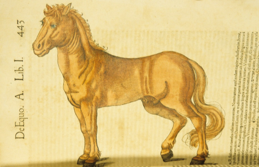 <p>Hand-colored woodcut of a horse in profile.</p>