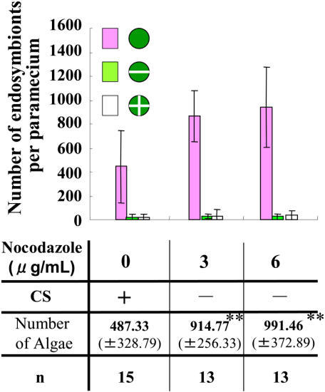 The bar graph shows the number of endosymbionts (±S.D.) after treatment with nocodazole or with 1% DMSO.** means a statistical difference P<0.001.