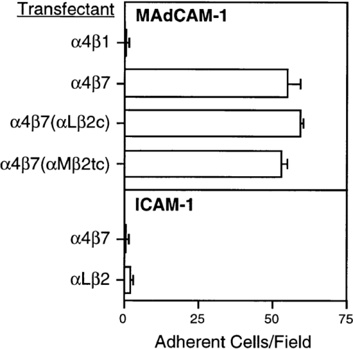 Adhesion to ligands  under flow. Adhesion of various integrin transfectants to  MAdCAM-1 (top) and ICAM-1  (bottom) measured at a wall  shear stress of 1 dyne/cm2 in  the absence of Mn2+, as described in Materials and  Methods. Bars indicate SEM.