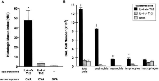 Mucus production  and airway inflammation in mice  after transfer of IL-4 +/+ or  IL-4 −/− Th2 cells and exposure  to inhaled OVA. BALB/c mice  received transfer of OVA-specific  IL-4 +/+ or IL-4 −/− Th2  cells and inhaled OVA. Controls  received no cells and inhaled  OVA. (A) HMI was performed  on lung sections stained with  DPAS. Mean HMI (±SEM) is  shown. (B) BAL cells recovered  from mice after exposure to 7 d  of inhaled OVA. Differential  counts were performed on  cytospins of cells recovered from  BAL of individual mice. Mean  cell counts (±SEM) are shown  (n = 4 mice per group). One  experiment is shown and is  representative of three experiments. Statistical significance was determined by unpaired Student's t test. *P <0.005, IL-4 +/+ Th2 vs. IL-4 −/− Th2. ‡P  <0.0001, IL-4 +/+ Th2 vs. IL-4 −/− Th2.