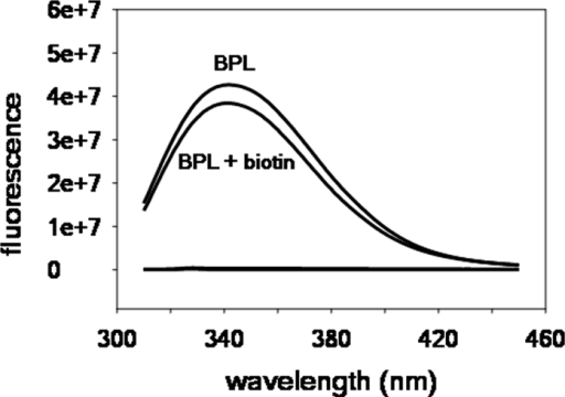 Flourescence titration.Steady state fluorescence emission spectra of MtBPL in absence and presence of biotin. [BPL] = 2 µM, [biotin] = 50 µM. All spectra were obtained in standard buffer at 20°C.