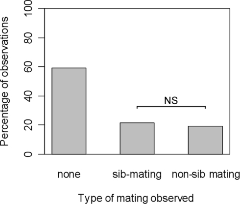 Percentage of observation trials in which there was either no mating, a mating between sibs, or a mating between non-sibs (experiment 2).Each female had the choice between a brother and an unrelated male. NS: non significant; * : p<0.05.