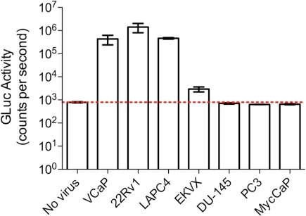 CWR22Rv1, LAPC4, VCaP and EKVX produce replication competent virus as indicated by Gaussia luciferase production in iGLuc-DERSE cells.10 µl of media was assayed 2 days after exposure to 24 hr. cell culture supernatant from CWR22Rv1, LAPC4 and VCaP, and 13 days (and 3 passages) after exposure to supernatant from EKVX, DU145, MycCaP (murine prostate cancer cell line) and PC3. Red line indicates background luciferase expression as determined by a mock-infected control. Error bars represent standard error of the mean for 3 experiments.