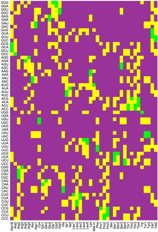 Decoding pattern arising from the cognate (green), near-cognate (yellow), and non-cognate (purple) relationships between all 61 sense codons and the 43 elongator tRNA species of E. coli as identified in Ref. [28].For each tRNA species, the near-cognate codons differ from the cognate ones by a mismatch in one position of the codon-anticodon complex.