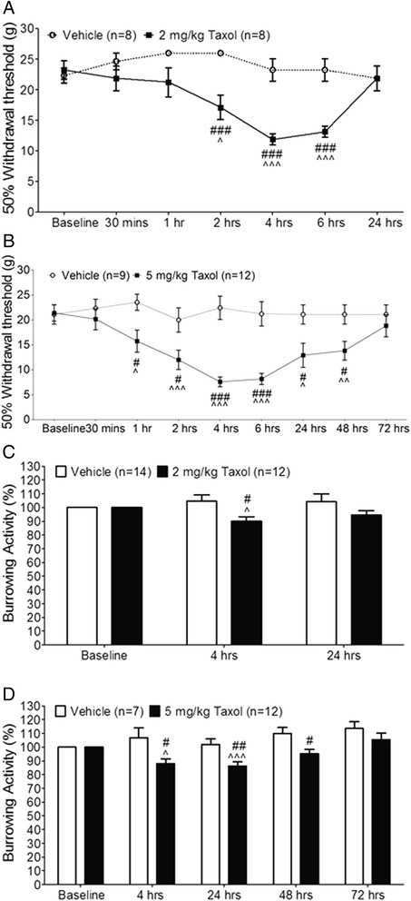 Paclitaxel induces acute mechanical allodynia and reduces burrowing activities. (A) and (B): Mechanical thresholds of withdrawal responses in rats before (baseline) and at different time points after i.v. injection of paclitaxel at 2 mg/kg (A), 5 mg/kg (B), or vehicle are plotted. (C) and (D): Burrowing activities in rats at different time points after i.v. injection of paclitaxel at 2 mg/kg (C), 5 mg/kg (D), or vehicle are normalized to burrowing activities collected before the i.v. injection (baseline). Comparisons between baseline and at each time point are indicated with ^ for the paclitaxel group. Comparisons between the vehicle group and the paclitaxel group at each time point are labeled with #. One symbol: P < 0.05; Two symbols: P < 0.01; Three symbols: P < 0.001.