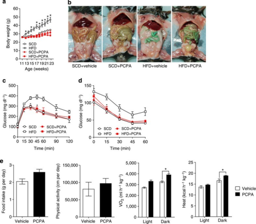 PCPA protects against diet-induced obesity.(a) Growth curves of vehicle- or PCPA-treated mice fed an SCD or HFD. n=4 mice per group. *P<0.05 versus HFD+PCPA by Student's t-test. (b) Gross images of vehicle- or PCPA-treated mice after 10 weeks of HFD feeding. (c) Intraperitoneal glucose tolerance test (IPGTT) after fasting for 16 h. n=3 mice per group. *P<0.05 versus HFD by Student's t-test. (d) Intraperitoneal insulin tolerance test (IPITT) after 4 h fasting. n=3 mice per group. *P<0.05 versus HFD by Student's t-test. (e) The metabolic rates of vehicle- or PCPA-treated mice after 6 weeks of HFD feeding. The metabolic parameters were measured using an 8-chamber Oxymax system. Mice were acclimatized to cages for 24 h and data were collected for an additional 48 h. n=4 mice per group. *P<0.05 versus vehicle by Student's t-test. All data are presented as the mean±s.e.