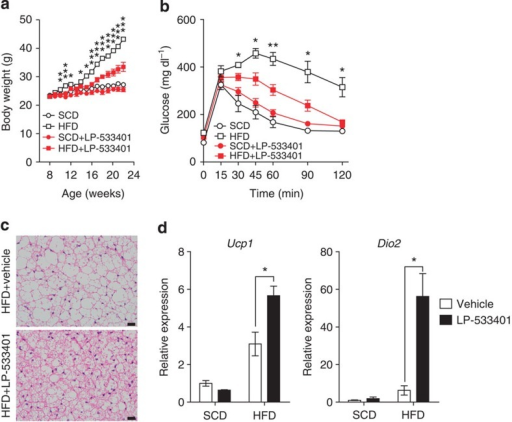 LP-533401 protects against diet-induced obesity and increased BAT activity.Mice were treated orally with vehicle or LP-533401 (30 mg kg−1) and fed an SCD or HFD for 14 weeks from 8 weeks of age. (a) Growth curves of vehicle- or LP-533401-treated mice fed an HFD. n=5 mice per group. *P<0.05, **P<0.01 and ***P<0.001 versus HFD+LP-533401 by Student's t-test. (b) Intraperitoneal glucose tolerance test (IPGTT) after 16 h fasting n=4 mice per group. *P<0.05 and **P<0.01 versus HFD+LP-533401 by Student's t-test. (c) Representative haematoxylin and eosin (H&E) images of BAT of vehicle- or LP-533401-treated mice. Scale bar, 20 μm. (d) Expression of thermogenesis-related genes in BAT was assessed by quantitative reverse transcriptase–PCR (qRT–PCR). n=4 mice per group. *P<0.05 versus vehicle by Student's t-test. All data are presented as the mean±s.e.