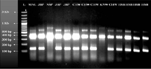 D3-PCR showing the different bands to differentiate A/D and B/C/E sibling species of An. culicifacies