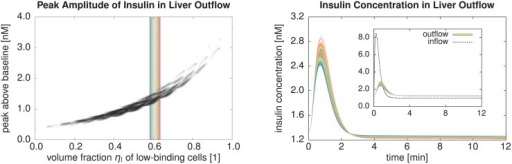 Parameter Study for the Insulin Model.The left plot shows the relation between the fraction of low-binding cellular volume and the peak-above-baseline amplitude of the outflowing insulin concentration obtained by the simulation for 4096 different spatial configurations of low-binding and high-binding cells. Generally, a higher fraction of low-binding cells implies less insulin uptake by the cells and thus a higher simulated outflowing concentration. The scattering, however, clearly shows that it is not a strict functional dependency. The shaded area in the scatter plot corresponds to the range ηl = 0.606 ± 0.025 near the observed fraction of low-binding cells. It comprises 436 cases, for which the corresponding curves of outflowing insulin concentration are shown in the right plot. The individual lines are colored according to the low-binding cellular volume, cf. the shaded area in the scatter plot. The fact that these are not spectrally ordered from blue to red again shows that the simulation result does not only depend on the low-binding cellular volume fraction but also on the actual spatial configuration.