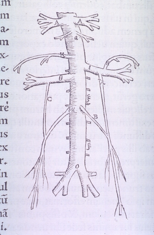 <p>Inferior vena cava, renal and spermatic veins.</p>