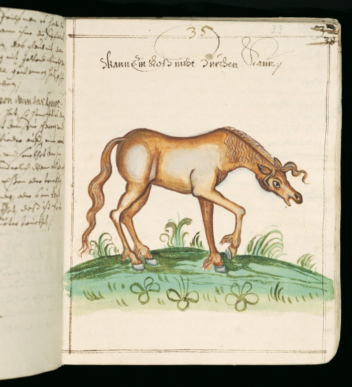 <p>Image of two facing pages from &quot;Rossarzneibuch&quot;, vol. 1, p. 33a. Featured is a drawing of a horse in its usual stance when unable to defecate. Also contains handwritten script in German.</p>