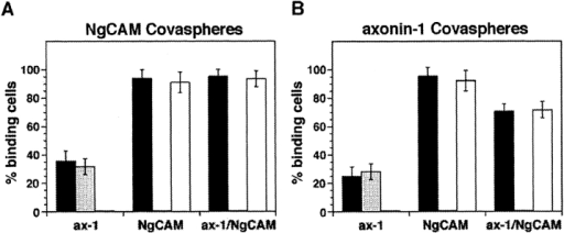 Binding of NgCAM and axonin-1-microspheres to cells  that express axonin-1, NgCAM or coexpressed axonin-1 and NgCAM: Quantitative analysis of the binding of NgCAM (A) and  axonin-1 (B) Covaspheres to COS cells expressing axonin-1 (ax-1),  NgCAM (NgCAM) and coexpressing axonin-1 and NgCAM  (ax-1/NgCAM). Cells were preincubated with control- (filled  bars), anti-NgCAM- (shaded bars), and anti-axonin-1- (empty  bars) Fab. In case of the single axonin-1 or NgCAM transfections, green fluorescing cells that bound four or more red fluorescing Covaspheres were scored as positive cells. In axonin-1–NgCAM cotransfection cells of comparable fluorescence for  axonin-1 and NgCAM staining were selected by examination  with the corresponding single-pass filters. Again, cells that bound  four or more red fluorescing Covaspheres were scored as positive. Cells that did not express NgCAM or axonin-1 were used as  internal negative controls and were found to bind on the average  0.1 axonin-1 or NgCAM Covaspheres. Each column corresponds  to four independent experiments (± SD). The capability of NgCAM to bind axonin-1 microspheres is only partially reduced in  axonin-1–NgCAM coexpressing cells. This may be due to a stoichiometric excess of NgCAM versus axonin-1 in the coexpressing cells we selected for quantification. Combined analysis using  immunofluorescence microscopy and quantitative immunoblotting, performed on axonin-1–NgCAM coexpressing cells indeed  revealed a comparably weaker immunostaining of NgCAM on  cells with similar amounts of axonin-1 and NgCAM protein (data  not shown).