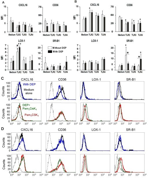 DEP and PAMP modulate protein expression of Scavenger Receptors in MDDC. MDDC were cultivated with TLR2, -3 and -4 ligands respectively Pam3CSK4 (10 μg/ml), poly(I:C) (10 μg/ml) and LPS (1 μg/ml), associated or not with DEP (10 μg/ml). A-B Dendritic cells activated during 6 h (A) and 24 h (B) were labelled for CD36, CXCL16, LOX-1 and SR-B1, and analyzed by flow cytometry. Data are expressed as the mean ± SEM from 3 to 7 independent experiments. +: p < 0.05; ++: p < 0.01 compared with unstimulated cells. ✻: p < 0,05 compared with TLR-treated cells. C-D Flow cytometry histograms of a representative experiment. MDDC were cultivated for 6 h (C) and 24 h (D) with DEP (blue line), with TLR2 ligand (Pam3CSK4, red line), and with both stimuli (green line) as compared with cells in medium alone (black line).