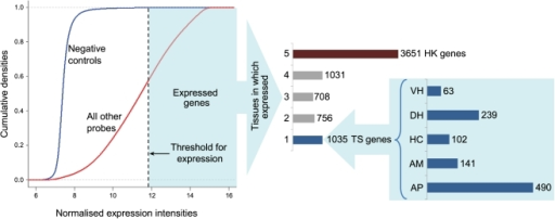 "Determination of expressed genes and their tissue wise distribution.The blue line in the graph on the left represents expression levels of negative controls on the microarray and the red line represents that of all other probes. The 99.9% quantile value of expression levels of all negative controls across all arrays was 11.94, which was taken as the threshold above which a gene was considered as expressed. The graph on the right depicts the number of tissues in which the expressed genes are distributed and their tissue wise distributions. Here, '1' represents the ""tissue-specific"" genes i.e. expressed only in one tissue (total of 1035), '2' represents genes expressed in 2 tissues and so on. Number '5' represents genes expressed in all five tissues which we defined here as ""housekeeping"" genes (total of 3651). (AP-Anterior Pituitary, AM-Amygdala, HC-Hippocampus, DH- Dorsal Hypothalamus, VH-Ventral Hypothalamus)."