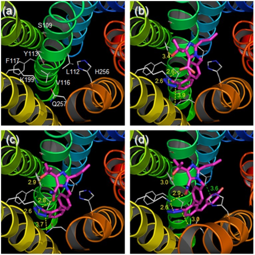 Putative binding mode of various ligands in AT1 receptor.Transmenbrane (TM)1–7 are shown as colored ribbons: blue (TM1), cyan (TM2), green (TM3), lime green (TM4), yellow (TM5), orange (TM6) and red (TM7). Sidechains of the focused residues are shown as gray lines, and ligands are represented as magenta sticks. The hydrogen bonds and electrostatic interactions are indicated by yellow dotted lines. The distance between Leu112 and the hydroxyphenyl moiety of R794847 is represented as a green dotted line. The unit of distance was Å. (a) without ligand, (b) olmesartan, (c) R239470, (d) R794847.