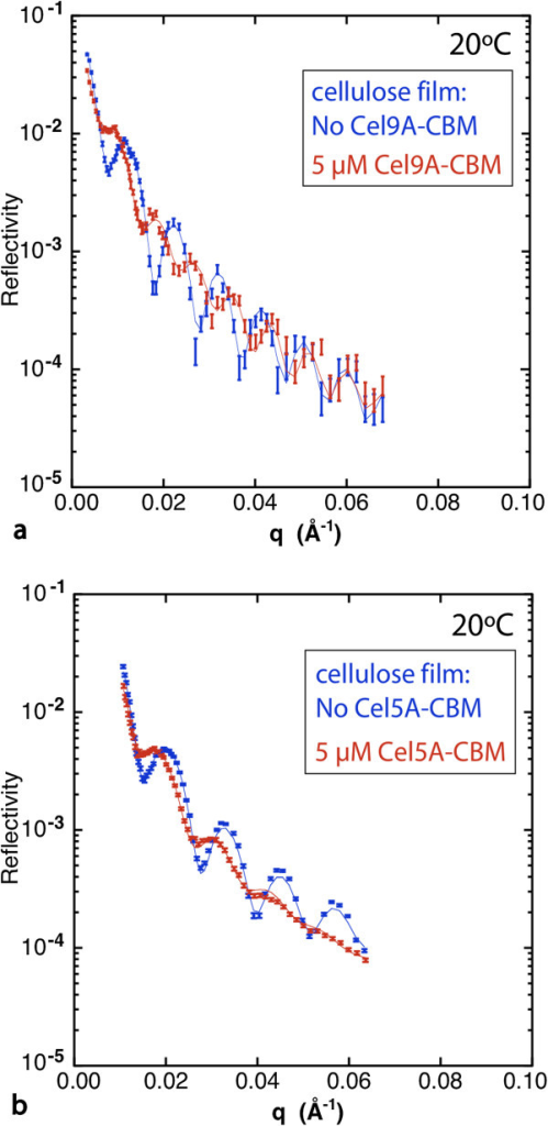 Figure 3 Neutron reflectivity data from cellulose films exposed to the chimeric cellulases Cel9A-CBM (a) and Cel5A-CBM (b) at 5 μM and 20°C. The fringe pattern, related to the thicknesses of the various layers, is distinctly different for the two chimeras: the fringes decay uniformly with qz for Cel5A-CBM, whereas for Cel9A-CBM the first three fringes are damped relative to the fringes at higher qz. The latter pattern indicates a distinct layer of enzyme adsorbed at the surface of the film.