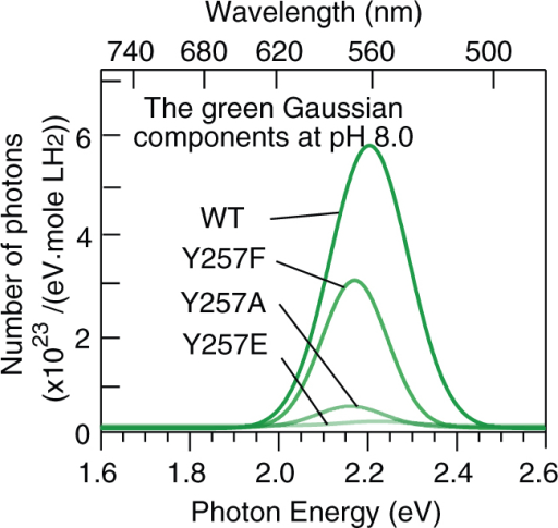 Green (~560 nm) Gaussian components in the spectra of wild-type and Y257F/A/E mutant Lcr luciferases at pH 8.0.
