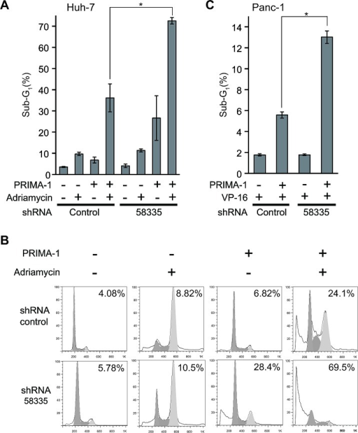 Effect of shRNA-58335 on apoptosis with the functional restoration of p53 with PRIMA-1(A) Huh-7 cells stably infected with lentivirus expressing shRNA-58335 or control sequences were treated with PRIMA-1 (200 μM) and/or adriamycin (0.5 μg/ml). Seventy-two hours after treatment, the cells were analyzed by flow cytometry. The percentage of cells in the sub-G1 phase is indicated. (B) Representative flow cytometry data in Huh-7 cells treated with PRIMA-1 and adriamycin. The percentage of cells in the sub-G1 phase is indicated. (C) Panc-1 cells were stably infected with lentivirus expressing shRNA-58335 or a control sequence. These cells were treated with VP-16 (300 μM) in the presence or absence of PRIMA-1 (200 μM). Forty-eight hours after treatment, the cells were analyzed by flow cytometry. The percentage of cells in the sub-G1 phase is indicated. In (A) and (C), error bars indicate the S.E. * indicates a p value < 0.05 by t-test.