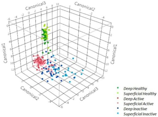 Discriminant analysis of superficial and deep strata samples from healthy skin, inactive digital dermatitis lesions and active digital dermatitis lesions.
