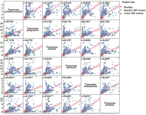 Linear correlation matrix illustrating the associations among all Treponema species that were highly associated with digital dermatitis.Linear correlation line (red line) and respective 95% C.I. (shaded red) as well as correlation coefficients for each association (upper left corner) are provided. A nonparametric density contour was used to illustrate how healthy (red dots), inactive (green dots), and active digital dermatitis (blue dots) samples are concentrated on each graph.