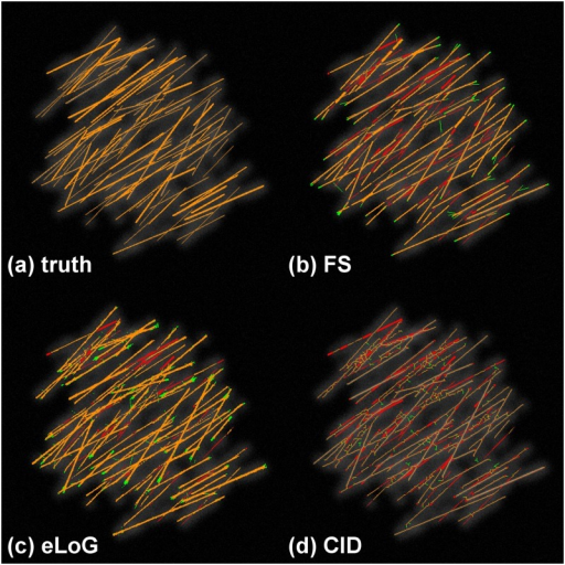Tracing results with false positives and missed filaments for a simulated cell.This illustration uses the simulated cell 05. Green pixels are false positives detected by the method, yellow are correctly identified pixels and red are missed pixels as in Fig 9.