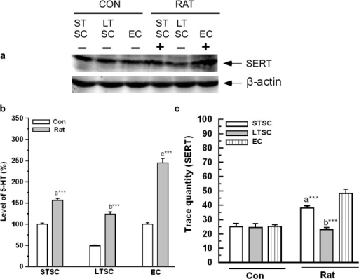 Effect of environmental enrichment on activation of SERT and 5-HT level in mice exposed to predator.(a) Representative western blots shows the level of SERT (70 kDa) and β-actin (43 kDa). (b) There was a significant increase in 5-HT level after exposure to predator in STSC, LTSC and EC mice. (C) SERT protein level was significantly increased in EC following predator exposure than STSC and LTSC mice. Data were shown as mean ± SEM, * indicates significant difference (*P < 0.05; **P < 0.01; ***P < 0.001), respect to comparison between groups (a = STSC verses LTSC; b = LTSC verses EC; c = STSC verses EC). Raw data is provided in S2 Data.