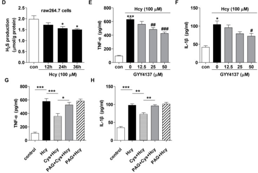 Effect of H2S modulation on the pro-inflammatory cytokines in the plasma of methionine-treated mice and Hcy-treated raw264.7 cells. (A–C) H2S-releasing agent GYY4137 ameliorated while CSE inhibitor PAG aggravated the increases of plasma TNF-α (A) and IL-1β (B) levels in methionine diet-treated mice. Neither GYY4137 nor PAG altered the plasma Hcy level (C); For methionine diet, C57BL/6 mice were administered with 2% methionine in drinking water for 14 consecutive days. For GYY4137 and PAG treatment, mice were pre-treated with GYY4137 (50 mg/kg/day, i.p.) or PAG (37.5 mg/kg/day, i.p.) for three days before subjected to 2% methionine supplement. n = 4–7 animals in each group; (D) Hcy treatment reduced H2S production in raw264.7 macrophages; (E,F) GYY4137 (12.5, 25, 50 µM) pre-treatment for 1 h attenuated the increases of TNF-α and IL-1β in Hcy (100 µM, 24 h)-treated macrophages; (G,H) Raw264.7 cells were pre-treated with Cys (1 mM), in the presence or absence of PAG (1 mM) co-treatment for 30 min, before being subjected to Hcy (100 µM, 24 h) treatment. n = 4–9. *p < 0.05, **p < 0.01, ***p < 0.001 compared to its corresponding control group. #p < 0.05, ##p < 0.01, ###p < 0.001 compared to Hcy group. N.S., not significant.