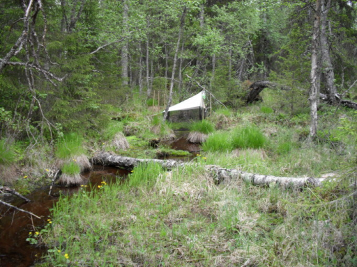Malaise trap in Kemijärvi, Finnish Lapland, Pyhä-Luosto National Park, close to Huttuoja. The sampling site is a mixture of habitats, such as rusty spring brook, riparian forest and pine mire. Rare Holarctic fungus-gnat Sciophilaarizonensis Zaitzev was identified from the trap material. J. Salmela 6/2014.
