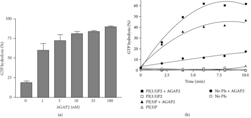 AGAP2 efficiently stimulates GTP hydrolysis on Arf1 and GAP activity is stimulated by products of PI3K, PtdIns(3)P, and PtdIns(3,5)P2. Recombinant myristoylated Arf1 was purified from E. coli as previously described [20]. AGAP2 cDNA was inserted into the pACHLT-A baculovirus shuttle vector and cotransfected with linearized BaculoGold viral DNA into sf9 cells. Culture supernatants were used to infect sf9 cells with an MOI of 10. Insect cells were collected 48 h after infection and His6-AGAP2 was purified from sf9 lysates by chromatography on Ni-trap columns. (a) GTPα32P was loaded onto Arf1 in the presence of 1 mg/mL of liposomes composed of phosphatidylcholine, phosphatidylethanolamine, and phosphatidylserine (molar ratio 40.55 : 31 : 28.45) for 30 min at 30°C. AGAP2 at the indicated concentrations was mixed with 0.3 μM GTPα32P-loaded Arf1 and incubated for 30 min at 30°C in GAP buffer (20 mM Tris pH 8.0, 2 mM DTT, 100 mM NaCl, 1 mM MgCl2, and 100 μg/mL liposomes). (b) GTPα32P was loaded onto Arf1 in the presence of 1 mg/mL of liposomes composed of phosphatidylcholine, phosphatidylethanolamine, phosphatidylserine (molar ratio 40.55 : 31 : 28.45), and liposome-supplemented PtdIns(3)P or PtdIns(3,5)P2 (molar ratio 37.4 : 28.5 : 26.2 : 7.9) for 30 min at 30°C. AGAP2 (10 nM) was mixed with 0.3 μM GTPα32P-loaded Arf1 and incubated at 30°C in GAP buffer for indicated time points. Reactions were stopped by dilution in ice-cold stop buffer (20 mM Tris pH 8.0, 1 mM DTT, and 10 mM MgCl2). Samples were filtered on Gelman GN-6 membranes and bound nucleotides were eluted with 2 M LiCl. GTP was separated from GDP by chromatography using polyethylenimine cellulose TLC plates developed in 1 M LiCl/1 M formic acid. The GTPα32P/GDPα32P ratios were calculated after exposure of TLC plates to a phosphorimager.