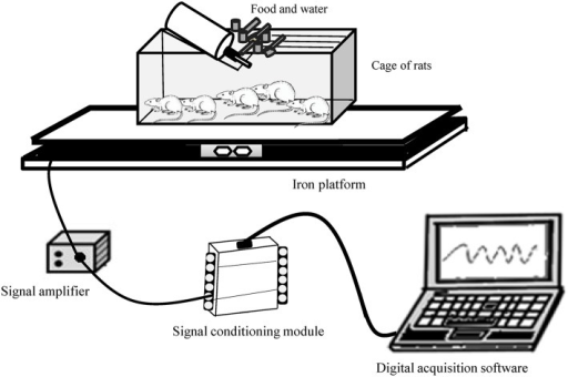 Gravimetric apparatus for measuring spontaneous physical activity of rats.