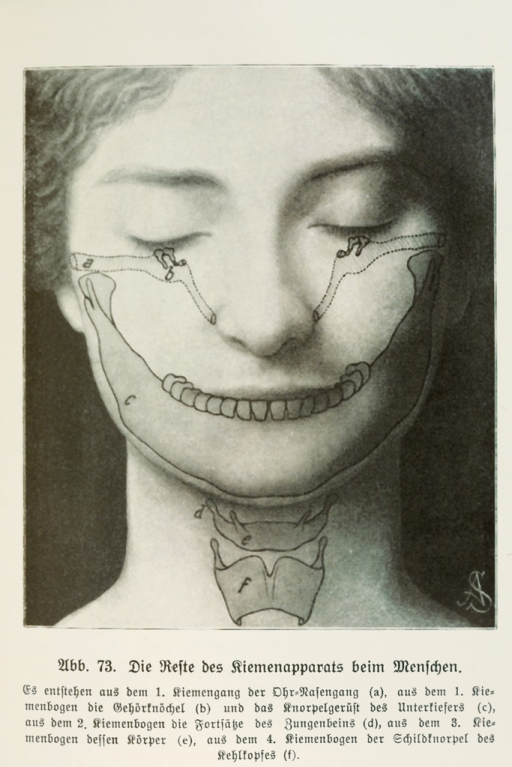 <p>A photomontage superimposed imaged of an anatomical diagram over the photograph of a young woman's face--which is parallel to an evolutionary superimposition: our evolutionary past coexists in our body with the evolutionary present.  The structures of human eyes, ear, nose, jaw, and throat shown in the picture corresponding to the gill structure of fish.  From Wunder in uns, pl. 19.</p>